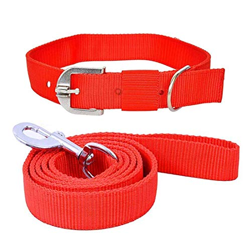 THE DDS STORE Dog Belt